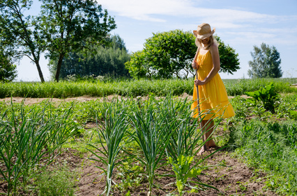 Barefoot gardener woman girl in yellow dress and hat work in garden with hoe between garlic and pea plant.